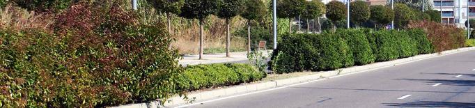 La Paeria reposa i millora cent arbustos a l'avinguda de Pinyana