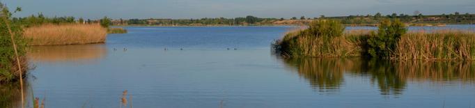 L'Estany d'Ivars i Vila-sana: una invitació a meditar entre ocells