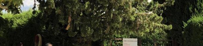 Mor ofegat un nen de set anys en una piscina de Les Borges