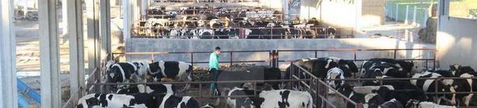Teresa Jordà defensa que la llet crua és segura