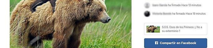 Més de 43.500 demanen transparència en les morts dels óssos del Pirineu