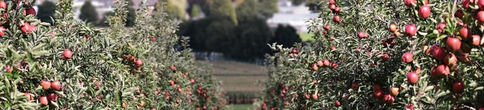JARC pressiona perquè la fruita i l'horta puguin accedir als ajuts directes de la PAC