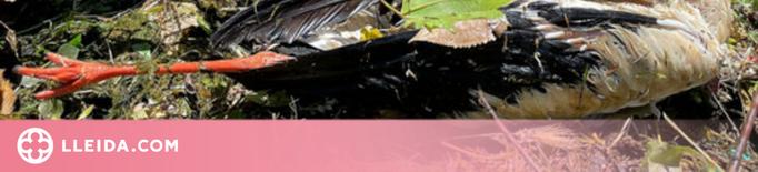 Ipcena denuncia més ofegaments de fauna salvatge al canal d'Urgell
