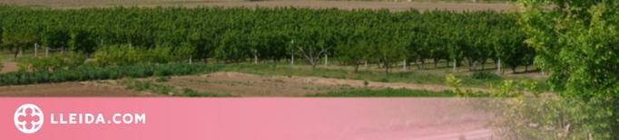 Llum verda a l'Ordenança reguladora dels usos i activitats de l'Horta de Lleida