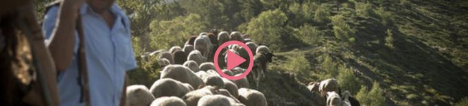 ⏯️ Sort estrena divendres un documental on s'aborda l'oposició a la reintroducció de l'os