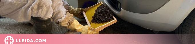 Rescat d'un rusc d'abelles als baixos d'un vehicle