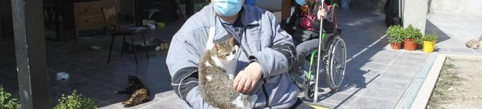 Tàrrega disposa del seu primer centre d'acollida temporal de gats