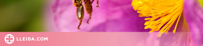 Preview abella pol·linitzant