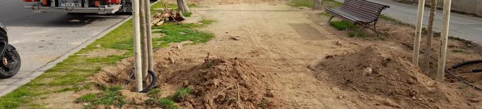 Comença la replantació d'arbres a Pardinyes i Balàfia