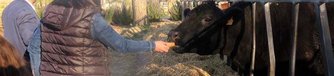 Engranja't, la proposta per viure una experiència agrocultural a l'Horta