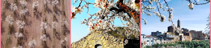 Centenars d'#AmetllersFlorits21 participen al concurs d'Instagram de les Garrigues