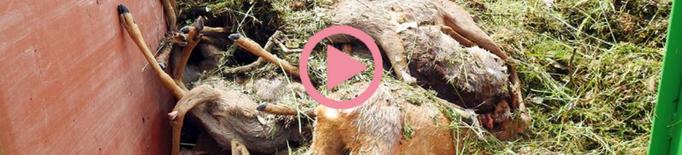 """⏯️ """"Els canals d'Urgell són una trampa mortal per la fauna que cal evitar"""""""