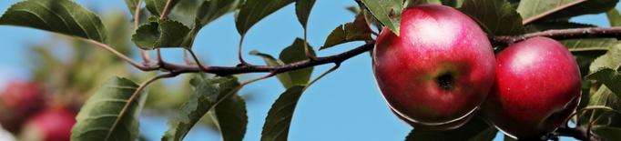Catalunya incrementa la producció de poma i disminueix la de pera respecte al 2020