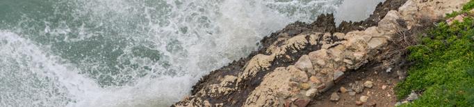Un estudi determina que el canvi climàtic afecta el plàncton del Mediterrani