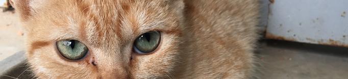 Crida a la ciutadania per adoptar gats del Refugi dels Peluts de Lleida