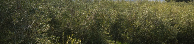 JARC reclama millores urgents en l'assegurança pel fred en l'olivera