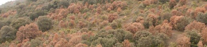 Els beneficis dels boscos mediterranis perillen si puja la temperatura global