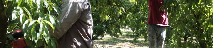 Alcaldes del Segrià plantegen un pla de vacunació per als temporers de la campanya de la fruita