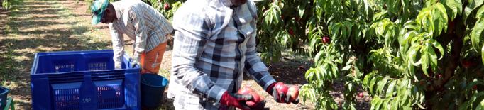 JxCat reclama a l'Estat vacunar a tots els treballadors de la fruita a Ponent