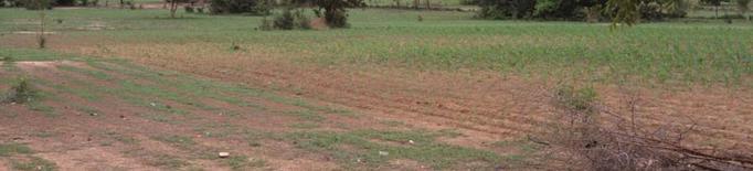 Els boscos de Togo poden ajudar a mitigar els efectes del canvi climàtic