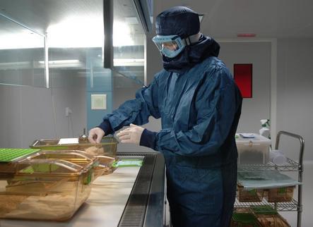 La UdL aplica 180 modificacions genètiques en ratolins per investigar avenços mèdics