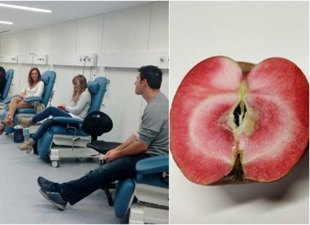 L'IRBLleida i la UdL estudien els beneficis de noves varietats de poma vermella en la salut cardiovascular
