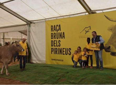 Set premis del concurs de raça bruna per a una granja d'Aran