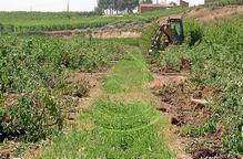 Menys ajudes d'Agricultura per focus de 'foc bacterià'