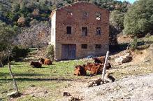 Ultimàtum al ramader de la Baronia de Rialb per fer el control sanitari als caps de bestiar