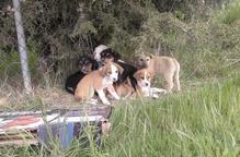 Abandonen un grup de cadells a la protectora d'Alguaire