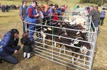 Més de 200 expositors a la fira ramadera comercial de Vielha
