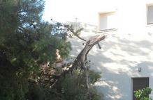 La tempesta de pedra de dimarts provoca danys en prop de 2.700 hectàrees de fruita