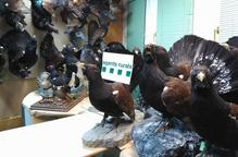 Investiguen un home al trobar-li 40 galls fers dissecats a Canejan