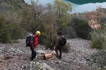 Rescaten un gos atrapat en un cingle a les Avellanes