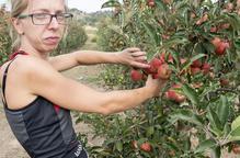 Sanaüja produeix quaranta tones de poma amb al Segarra-Garrigues