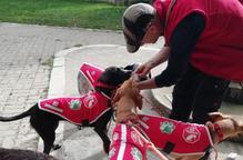 Cinc gossos d'una protectora inicien el Camí de Sant Jaume per buscar família