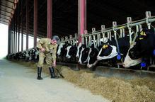 Certificat de qualitat per a granges BonÀrea