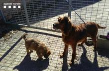 Multen l'amo de dos gossos a la Segarra per deixar-los escapar