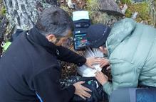 Seguiment via satèl·lit dels galls fers al Pirineu