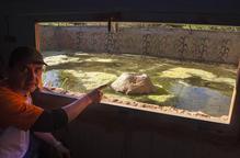 Vallbona habilita una bassa per poder observar amfibis i rèptils
