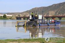 Retiren les algues del Segre al curs de regates de Mequinensa