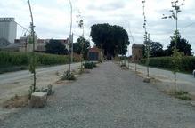 Denuncien la mort d'arbres a Vilanova de Bellpuig al no regar-los