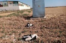 Més de 30 cigonyes mortes a la línia de l'aeroport Lleida-Alguaire