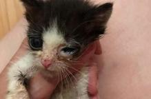 Troben tres cries de gat abandonades en un contenidor de Lleida