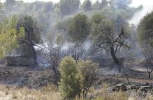 El Segrià contracta tretze aturats per netejar els boscos