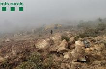Els Rurals denuncien una tala forestal il·legal al Pallars Jussà