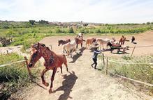 Un oasi per a cavalls al límit