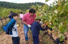 Tres cellers de Lleida ofereixen visites gratuïtes als sanitaris