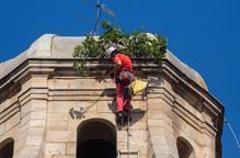 Retiren una figuera del campanar de Sant Martí