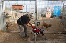 El mal tracte animal no cessa